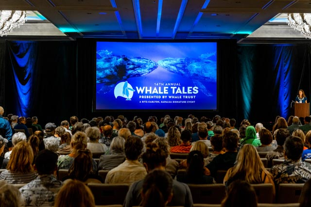 Whale Trust Whale Tales 2020_420_high_res_berkowitz