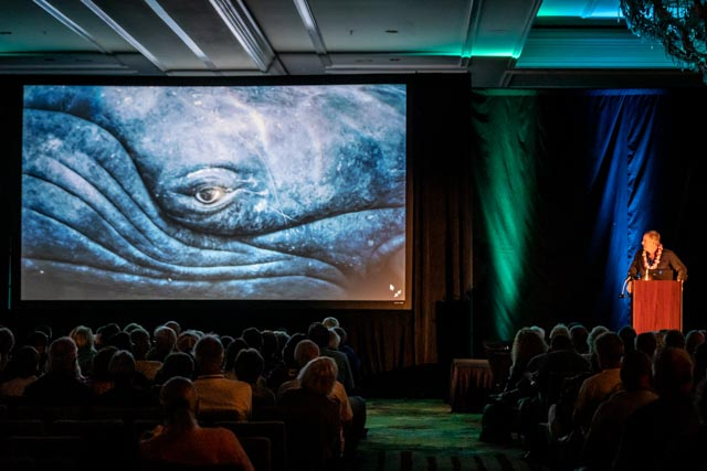 Whale Trust Whale Tales 2020_466_high_res_berkowitz