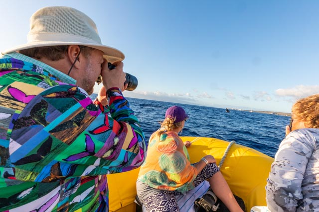 Whale Trust Whale Tales 2020_660_high_res_berkowitz